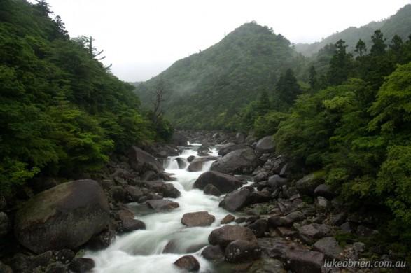 The mountainous interior of Yakushima