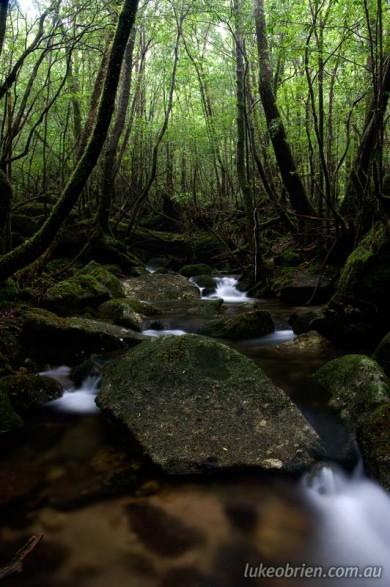 Small creek on the Arakawa Hiking trail, Yakushima