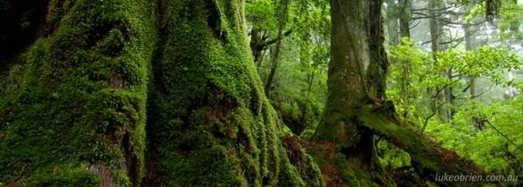Ancient Forest on Yakushima, Japan