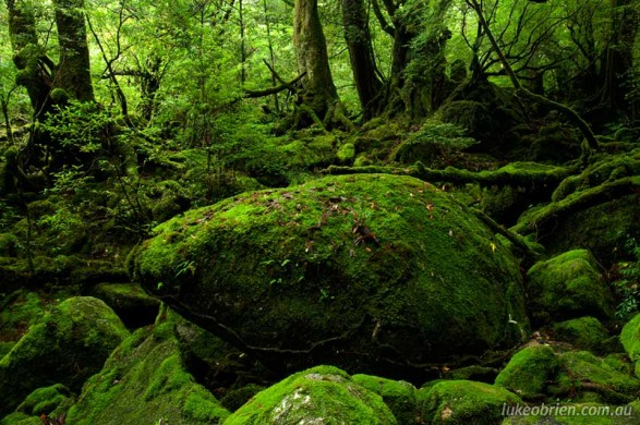 Yakushima Japan  city images : Yakushima Japan Shiratani Unsuikyo Luke O'Brien Photography