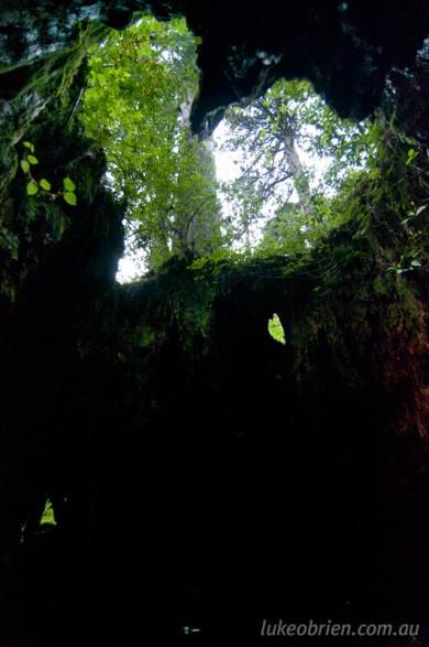 Yakushima Wilsons Stump